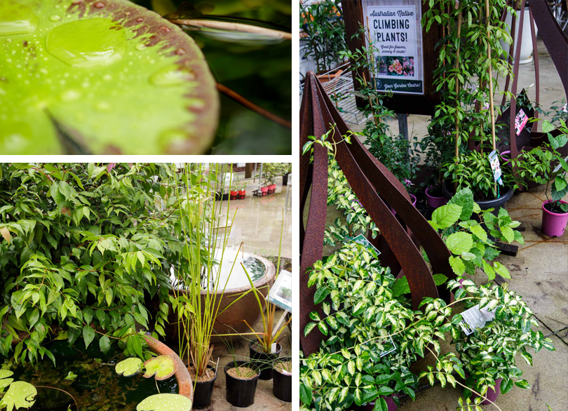 kunara-garden-center