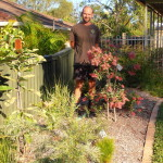 Native Plants to the Rescue!